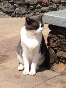 Photo of a cat in Gran Canaria