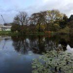 Photo of pond and trees in Copenhagen Botanical Gardens