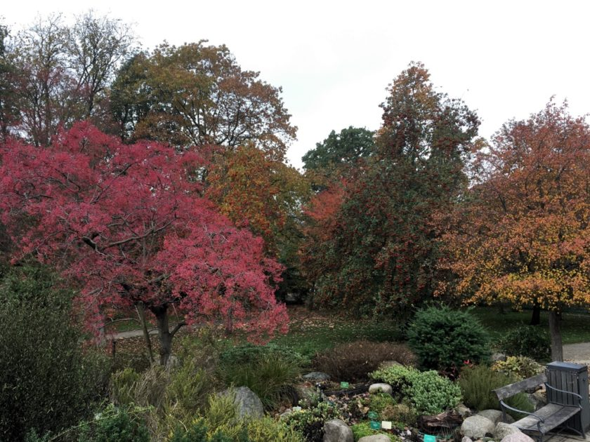 Photo of Autumnal Colours in Copenhagen Botanical Gardens