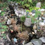 Photo of rockery and stream in Copenhagen Botanical Gardens