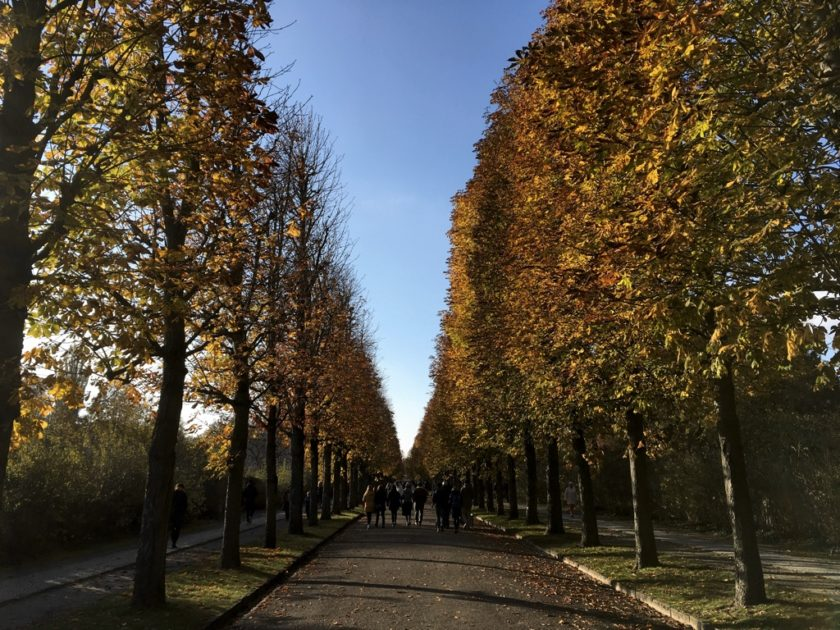 Trees turning golden brown in Sanssouci Park